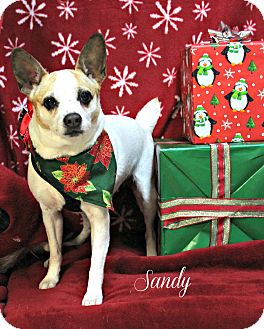 Jack Russell Terrier Mix Dog for adoption in Ocean View, New Jersey - Sandy