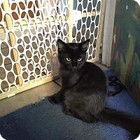Adopt A Pet :: Chili - Scottsdale, AZ