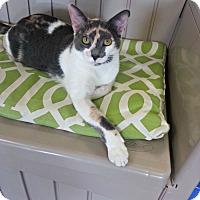 Adopt A Pet :: Judy - Chesapeake, VA