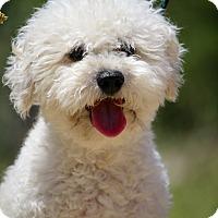 Adopt A Pet :: Cody - Fillmore, CA