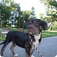 Adopt A Pet :: TaZZ - LAKEVILLE, MA