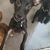 Adopt A Pet :: RUFIO - Inland Empire, CA