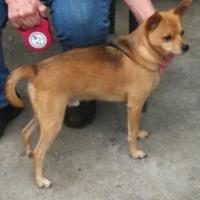 Adopt A Pet :: Tanner04192017 - Baton Rouge, LA