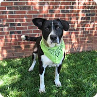 Adopt A Pet :: HAMILTON - Lexington, NC