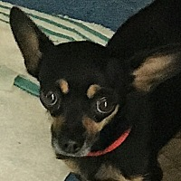 Adopt A Pet :: Kira - San Marcos, CA