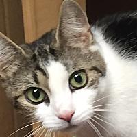 Adopt A Pet :: Nina - Horsham, PA