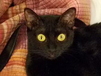 Adopt A Pet :: Judith  - Dallas, TX