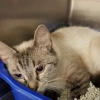 Adopt A Pet :: Kiki - Bishop, GA
