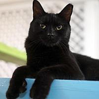 Adopt A Pet :: Hadley - Tucson, AZ