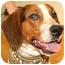 Photo 1 - Hound (Unknown Type) Mix Dog for adoption in Cincinnati, Ohio - Merle