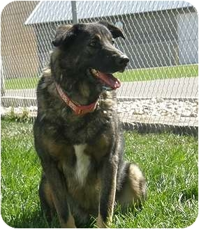 German Shepherd Dog Mix Dog for adoption in Meridian, Idaho - Roxy