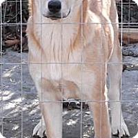 Adopt A Pet :: Shadow - Memphis, TN