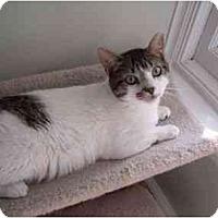 Adopt A Pet :: Lucky - Jenkintown, PA