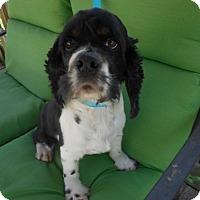 Adopt A Pet :: Sebastian - Kannapolis, NC