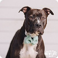 Adopt A Pet :: Petey - Portland, OR