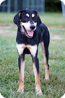 Hound (Unknown Type) Mix Puppy for adoption in Waldorf, Maryland - Roxie