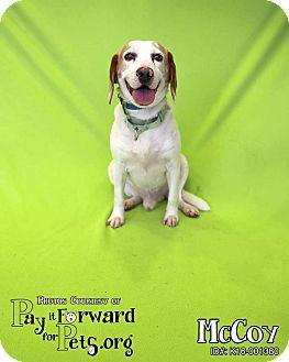Beagle Mix Dog for adoption in Seville, Ohio - McCoy