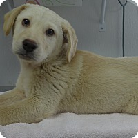 Adopt A Pet :: Ian - Manning, SC