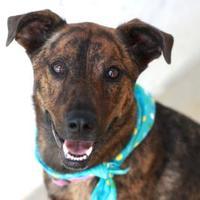 Adopt A Pet :: LADYBUG - Kyle, TX