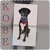 Adopt A Pet :: Kobe - Pawsitive Direction - Loxahatchee, FL
