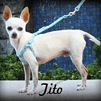 Adopt A Pet :: Tito - Anaheim Hills, CA