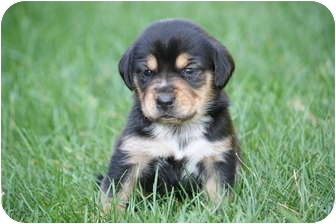 Beagle Mix Puppy for adoption in West Milford, New Jersey - HAPPY