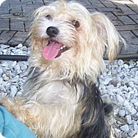 Adopt A Pet :: Beauty - CAPE CORAL, FL