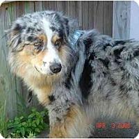 Adopt A Pet :: George - Orlando, FL