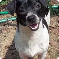 Adopt A Pet :: Chance - Allentown, PA