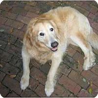 Adopt A Pet :: Wilson - Jacksonville, FL