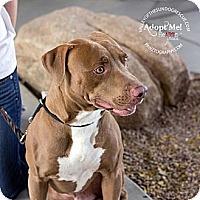 Adopt A Pet :: Hendrix - Mesa, AZ