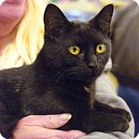 Adopt A Pet :: Almay - Pittstown, NJ