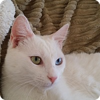Adopt A Pet :: Lily - San Fernando Valley, CA
