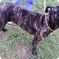 Adopt A Pet :: Libby - Ocala, FL