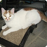 Adopt A Pet :: Fred-ADOPTED - Somerset, KY