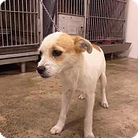 Adopt A Pet :: BETTY - Upper Sandusky, OH