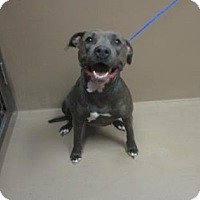 Adopt A Pet :: Daisy - Reno, NV