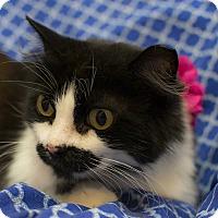 Adopt A Pet :: Mustascha - Addison, IL