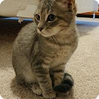 Adopt A Pet :: Star - Monroe, NC