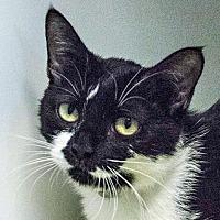 Adopt A Pet :: Agatha - Prescott, AZ