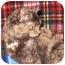 Photo 2 - Domestic Shorthair Kitten for adoption in Colmar, Pennsylvania - Crisbelle
