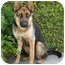 Photo 3 - German Shepherd Dog Dog for adoption in Los Angeles, California - Dixie von Deimler
