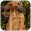 Photo 2 - German Shepherd Dog Mix Puppy for adoption in Los Angeles, California - Coral von Lawall