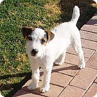 Adopt A Pet :: VALOR - Scottsdale, AZ