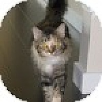 Adopt A Pet :: Ivy - Vancouver, BC