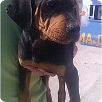 Adopt A Pet :: Keeley - Phoenix, AZ