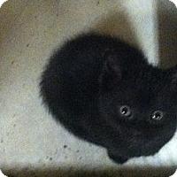 Adopt A Pet :: Cinder - Island Park, NY