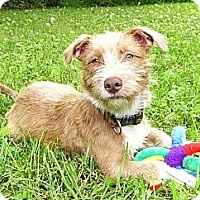 Adopt A Pet :: Jordy - Mocksville, NC