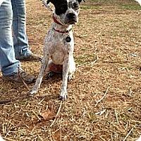 Adopt A Pet :: Lola - Blanchard, OK