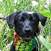 Adopt A Pet :: CAMMIE/Summer Special Pricing - Glastonbury, CT